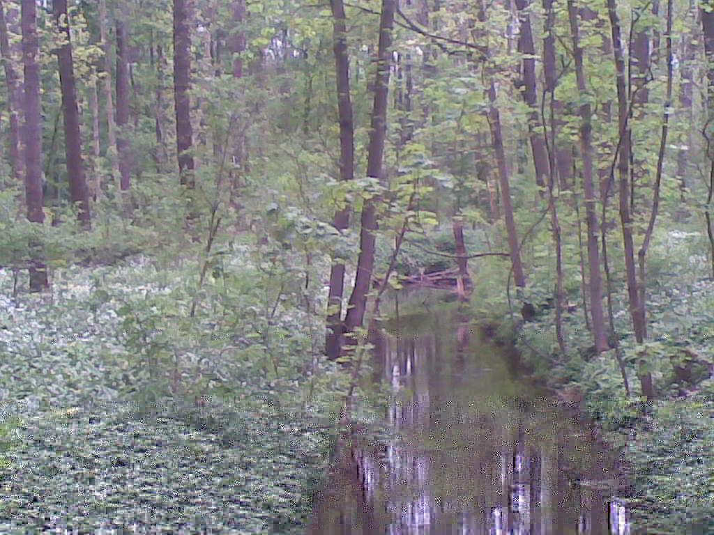 Die Gewässer können auch ruhig sein - Die Paußnitz - (C) Henning Uhle