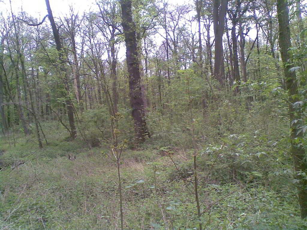 Und der Wald kennt verschwiegene Orte - (C) Henning Uhle