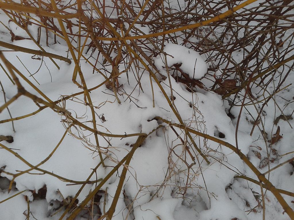 Plötzlich liegt Schnee - Foto by Henning Uhle