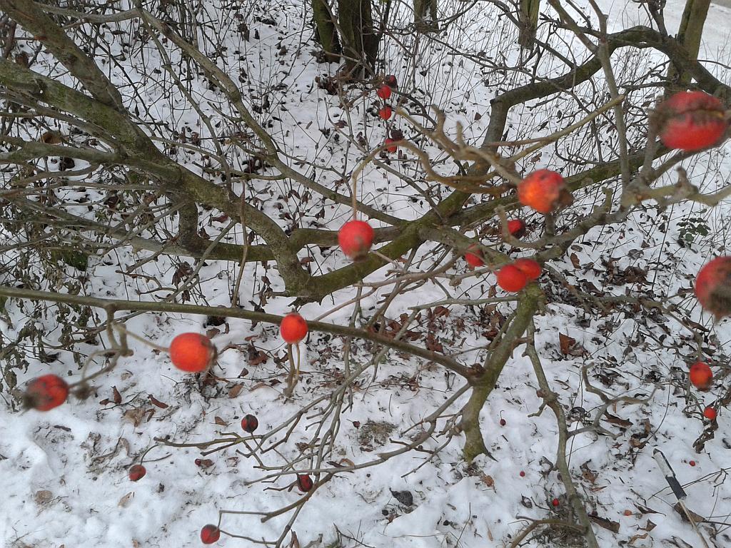 Winterliche Büsche mitten in Leipzig - Foto by Henning Uhle