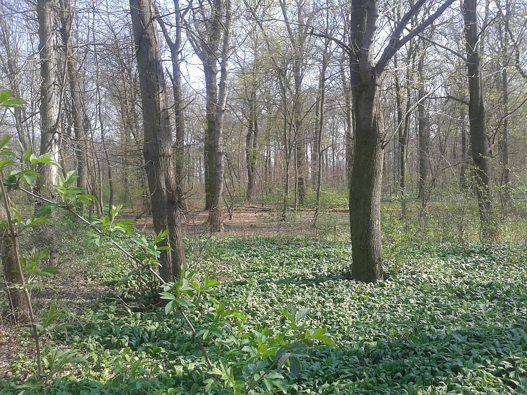 Eins der vielen Waldgebiete im Parkgelände - Henning Uhle