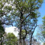 Wenn Bäume twittern