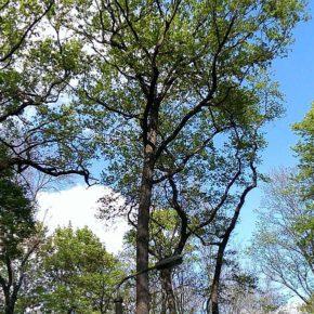 Sonne und strahlend blauer Himmel hinter der Baumkulisse - Henning Uhle
