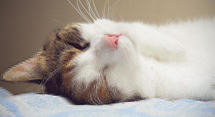 Nette Katze - (C) MLaLov CC0 via Pixabay.de