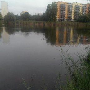Der Silbersee vom Südufer aus mit Lößnig im Hintergrund - Henning Uhle