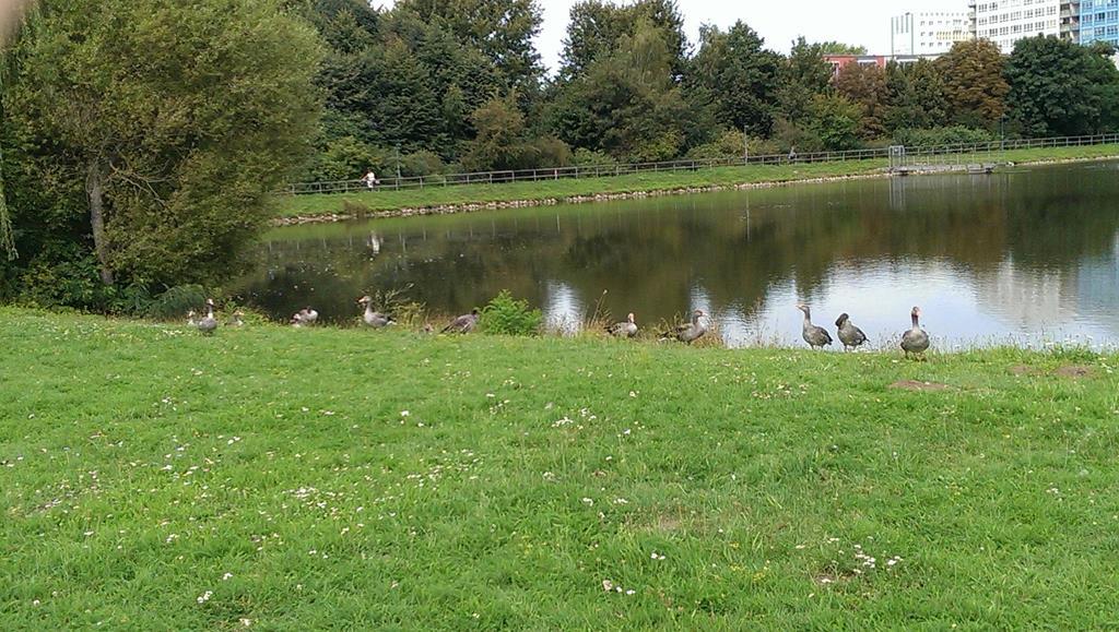 Jede Menge Wasservögel überall im Park - Henning Uhle