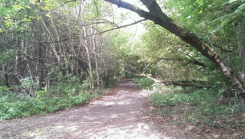 Schiefe, alte Bäume im Apitzsch Richtung Conne Island - Henning Uhle