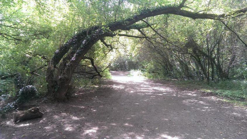 Schiefe Bäume im Apitzsch in der Pferdeschwemme - Henning Uhle