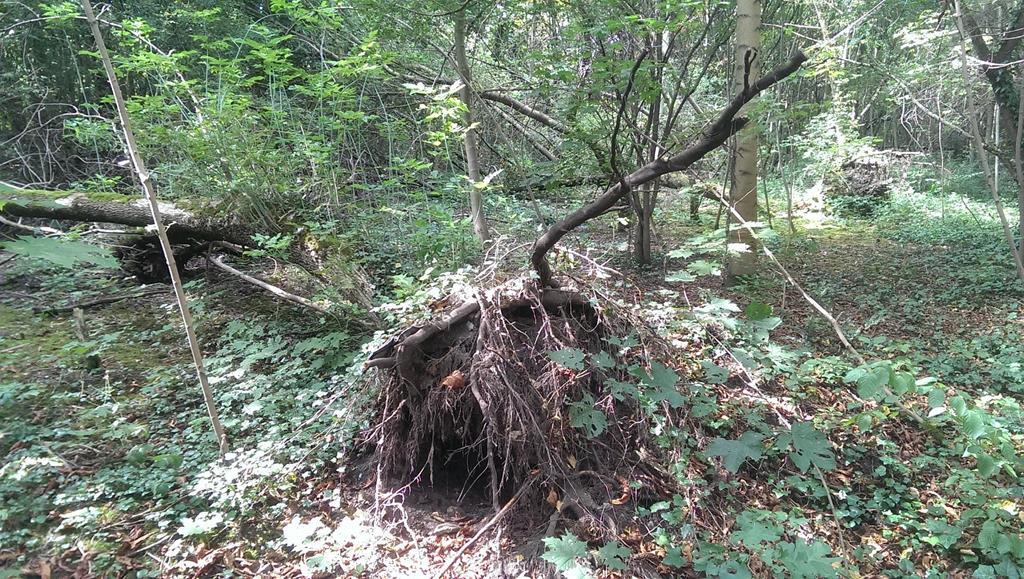 Alte Baumreste in der Pferdeschwemme - Henning Uhle