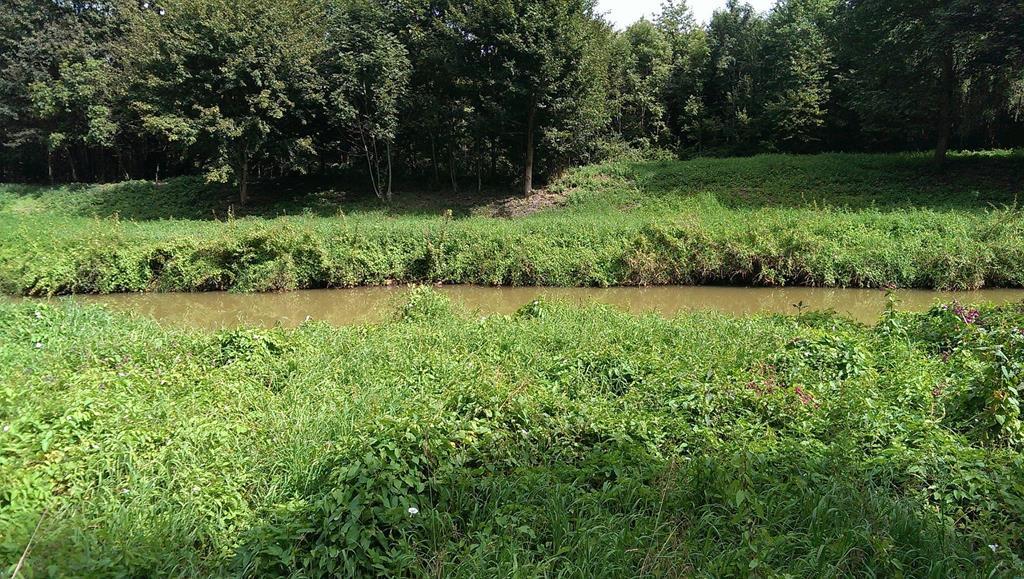 Hochwasser-Schutzgebiet Pleiße - Henning Uhle