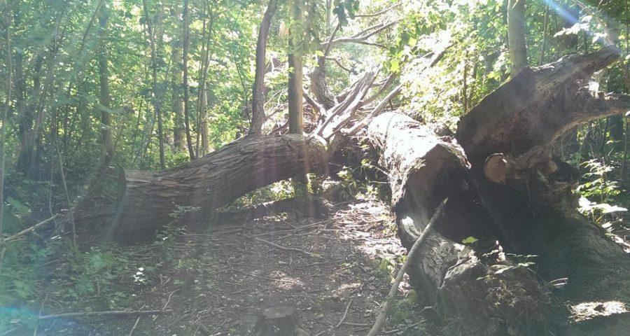 abgestorbene Baumreste zwischen Flussufer und Radweg - Henning Uhle