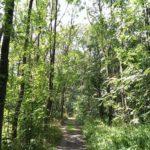 2017 – oder: Wenn Bäume sprechen, steht es in der Cloud