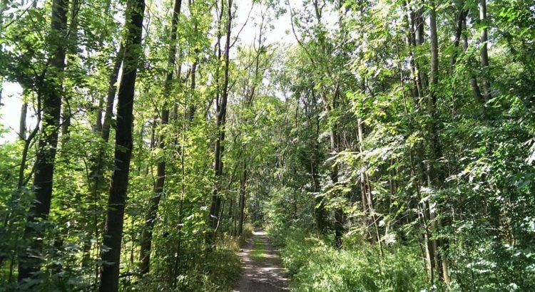 Eine typische Baumlandschaft im Auwald - Henning Uhle