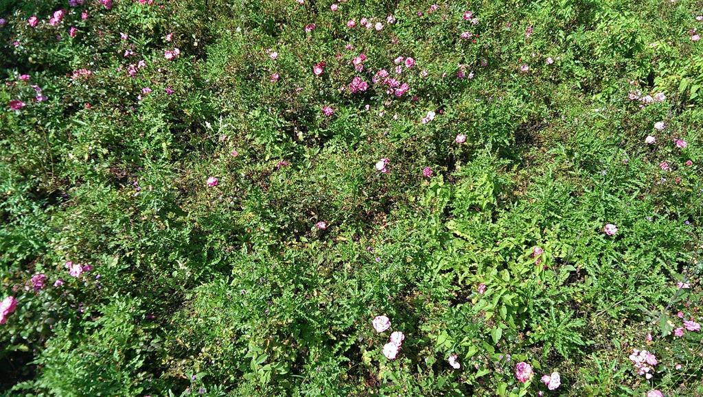Eine Blumenbepflanzung im Park - Henning Uhle