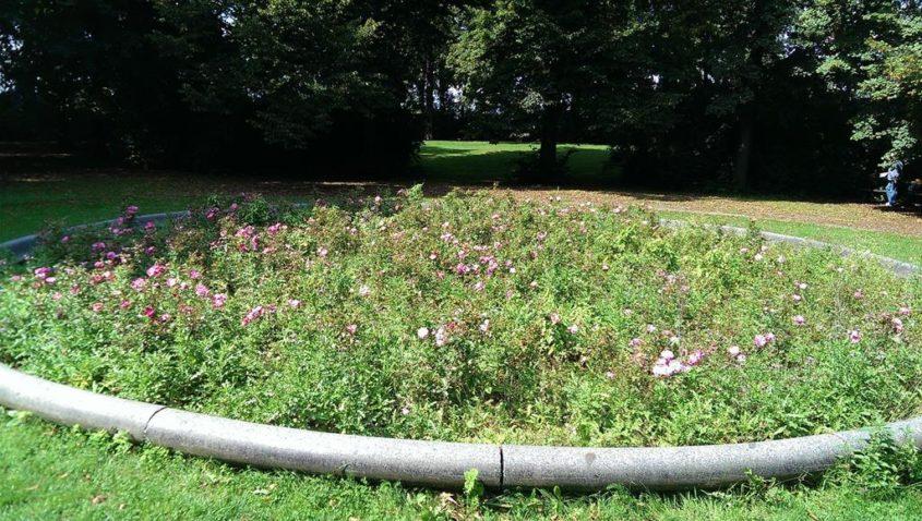 Eine Bluemenbepflanzung im Park - Henning Uhle