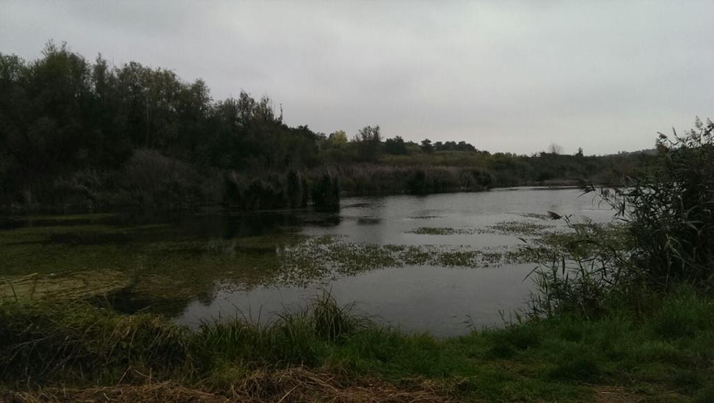 Der Elster-Saale-Kanal - Mit freundlicher Genehmigung Heidi Lange
