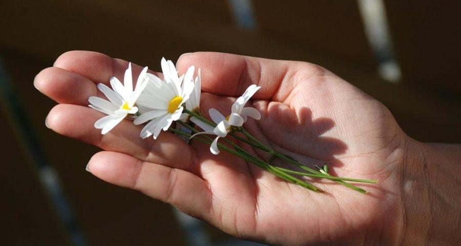 Blumen zum Anfang - (C) GLady via pixabay.de