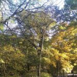 In eigener Sache: Herbstpause im Blog