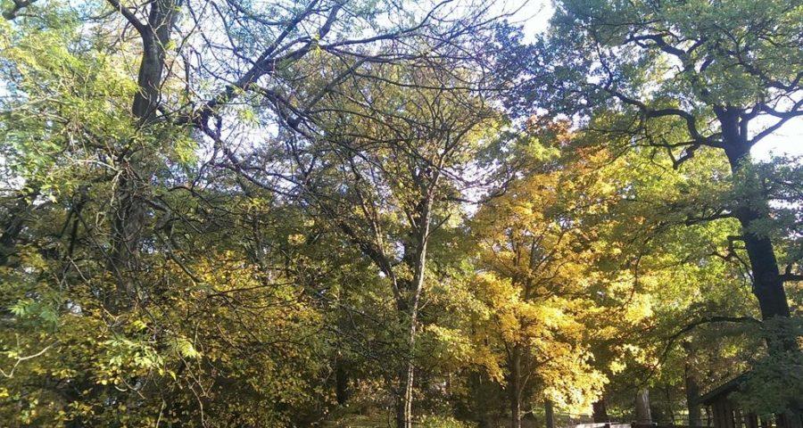 Herbstliche Bäume - Henning Uhle