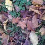 Herbst im Clara-Park von Leipzig