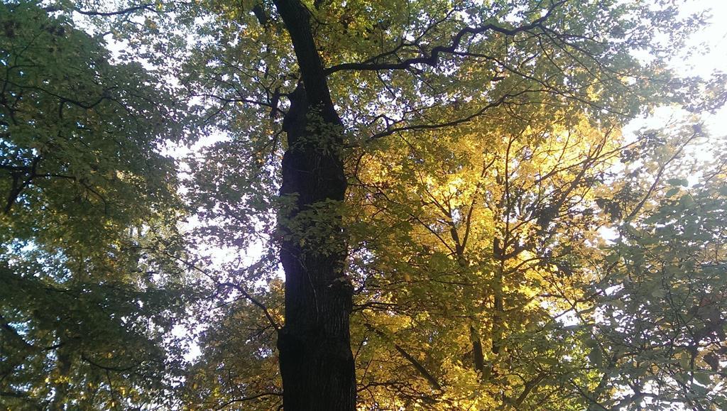 Die Sonne bricht sich zwischen den Bäumen - Henning Uhle