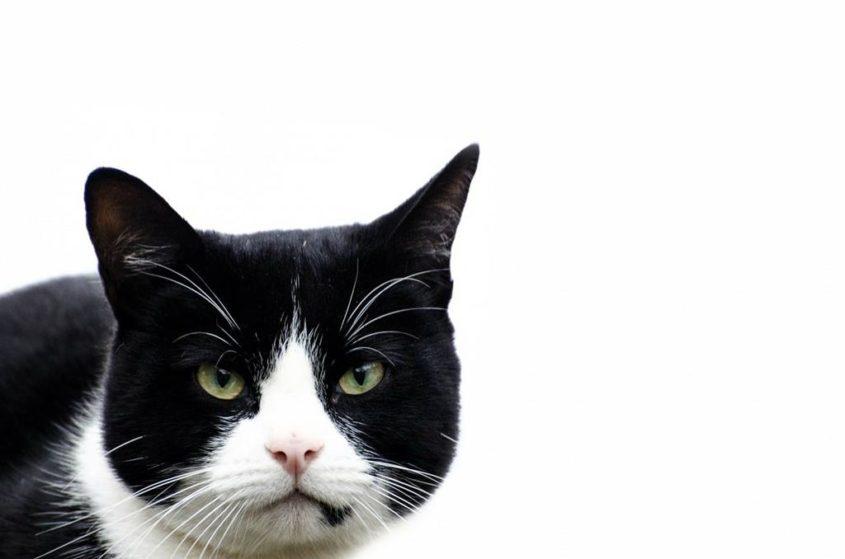 Die Katze als Stalker - (C) PublicDomainPictures CC0 via Pixabay.de