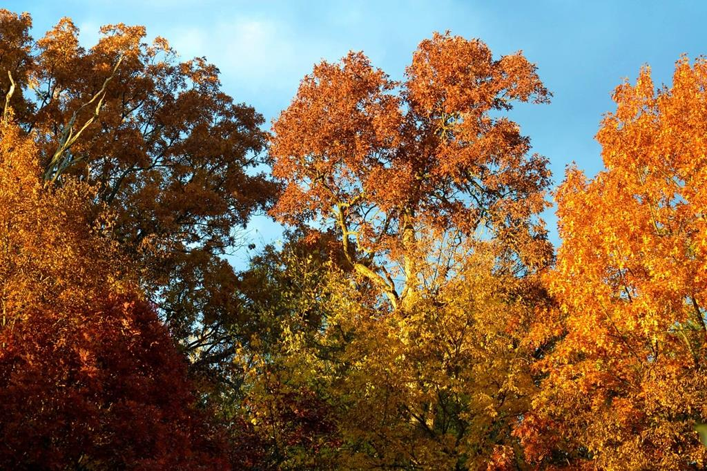 Laubbäume im Herbst - (C) jessib381 CC0 via Pixabay.de