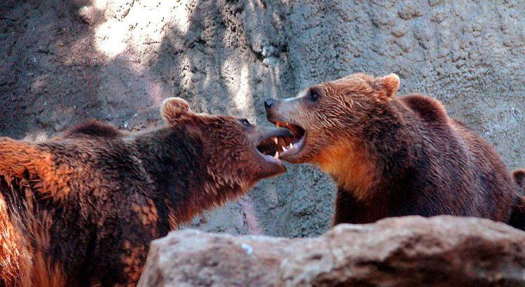 Bären beim Küssen - (C) clarita CC0 via morguefile.com