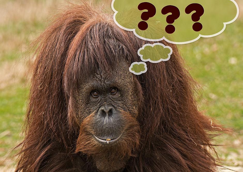 Ein denkender Affe - (C) Geralt Altmann CC0 via Pixabay.de