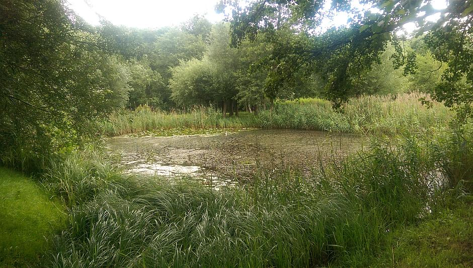 Einer der Teiche im Gelände des Parks