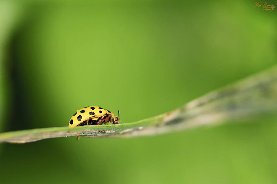 Ein Käfer auf'm Blatt - (C) depaulus CC0 via Pixabay.de