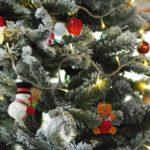 Nach Weihnachten: Wohin mit der Hallleluja-Staude in Leipzig