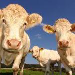 Drei Worte zu den Milchpreisen