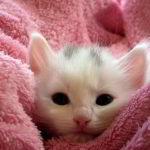 Das Kätzchen widerspricht den Facebook-Nutzungsbedingungen