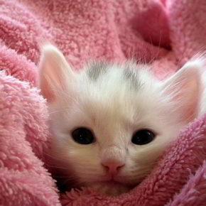Ein kleines Kätzchen - (C) AllAnd CC0 via Pixabay.de