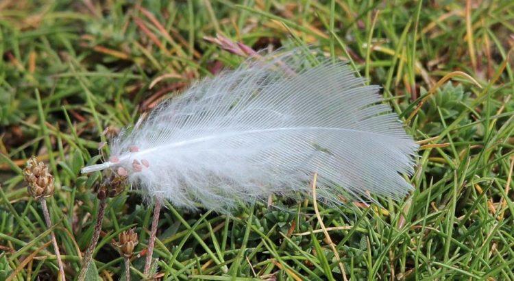 Eine Feder im Frühling - (C) FraukeFeind CC0 via Pixabay.de