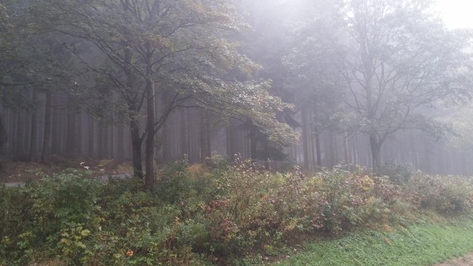 Herbst: Oktober-Nebel im Erzgebirge