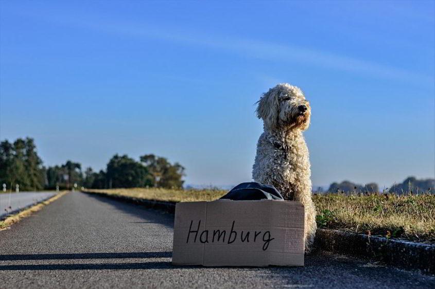 Ein trampender Hund - (C) DanielBrachlow CC0 via Pixabay.de