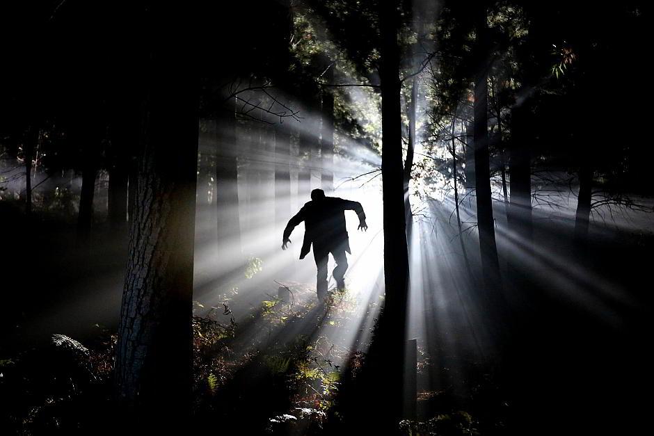 Nachts im Wald - (C) maraisea CC0 via Pixabay.de