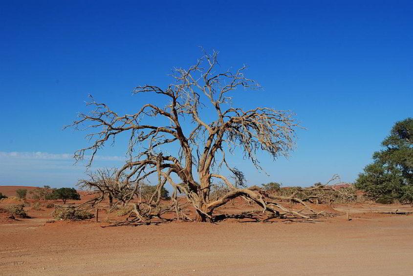 Ein vertrockneter Baum in der Namib-Wüste, Afrika - (C) nike159 CC0 via Pixabay.de