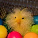 Pause an Ostern und Pläne danach