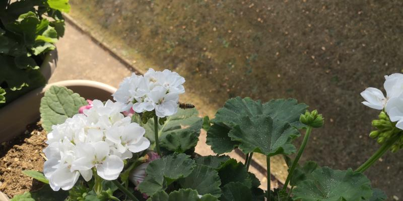 Wespen im Anflug auf Blumen