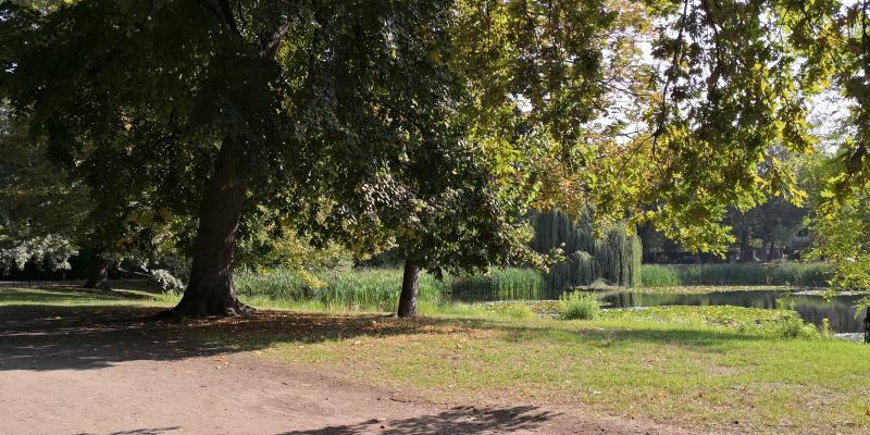 Wiese im Arthur-Bretschneider-Park