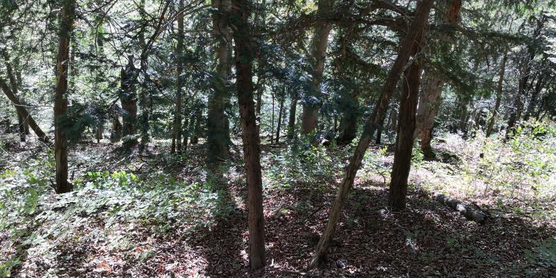 Wald und Urlaub: Bei Heilbad Heiligenstadt