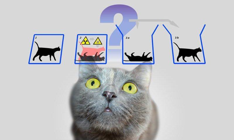 Schrödingers Urheberrecht - Tot oder lebendig? - (C) Geralt Altmann - Pixabay License - via Pixabay.com