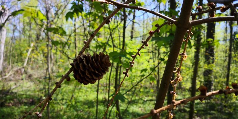 Das Oberholz - Ab in die Sommerfrische