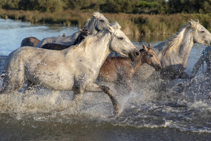 Run to the Sun: Auch für Pferde - (C) XtianDuGard Pixabay Lizenz -