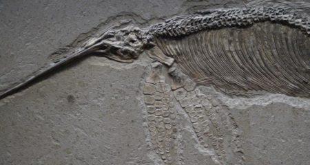 Ein Ichthyosaurus als Teil von The Greatest Show on Earth - (C) Efraimstochter -
