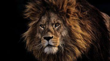 Brave: Der Löwe unter den Browsern? - (C) Alexas_Fotos - Pixabay-Lizenz - via Pixabay.com