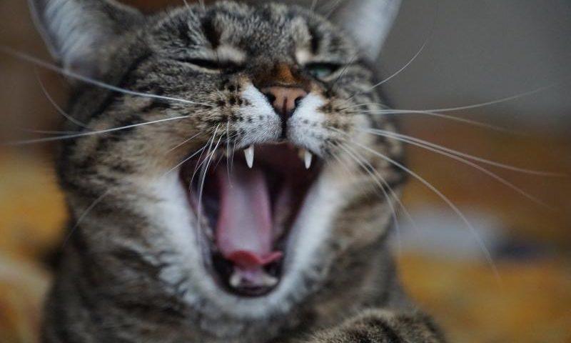 Empörung und Aufregung: Was ist im Land los? - (C) photosforyou - Pixabay-Lizenz - via Pixabay.com